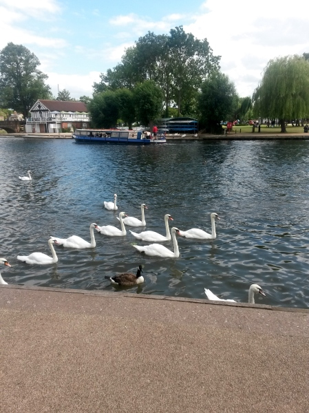 down along the river in Stratford-upon-Avon